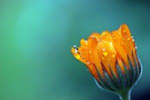 Medicina Natural: 10 Plantas medicinales que debes tener en casa